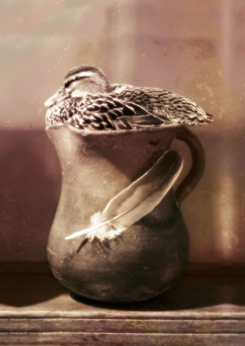 Duck in Jug